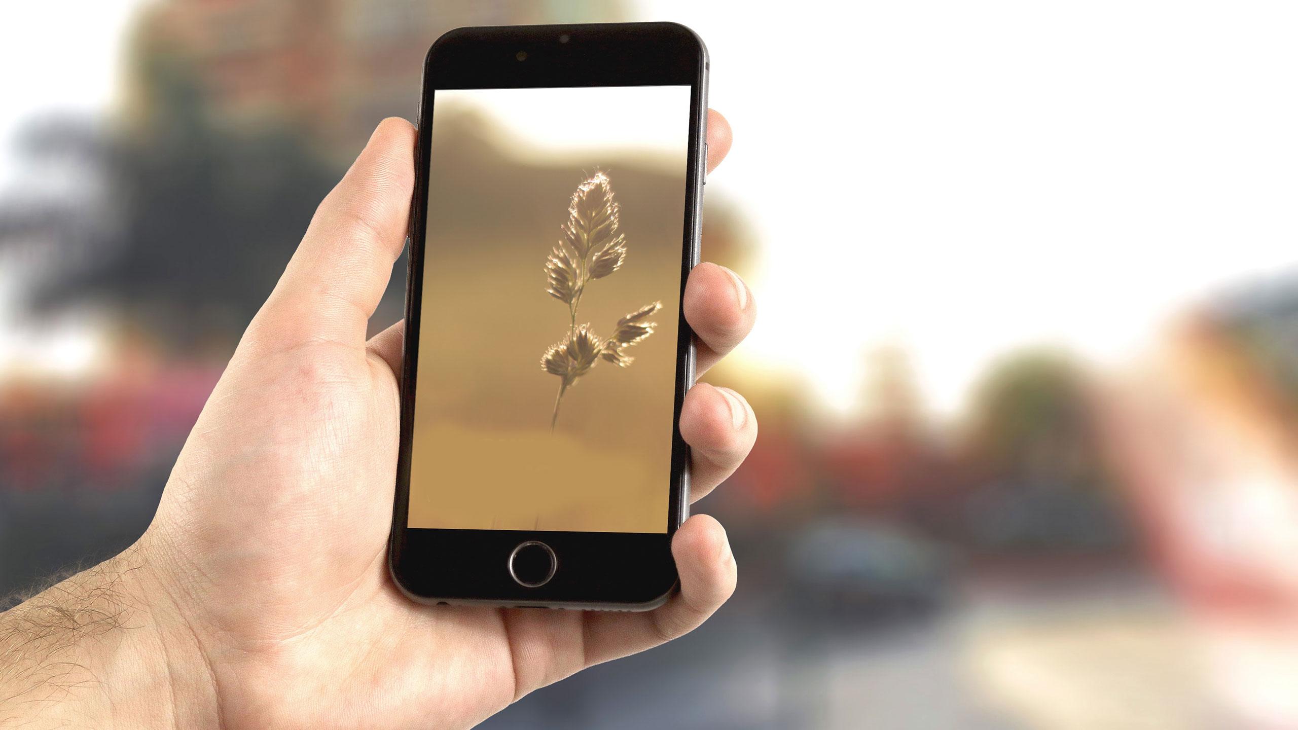 Sprzęt, smartfon